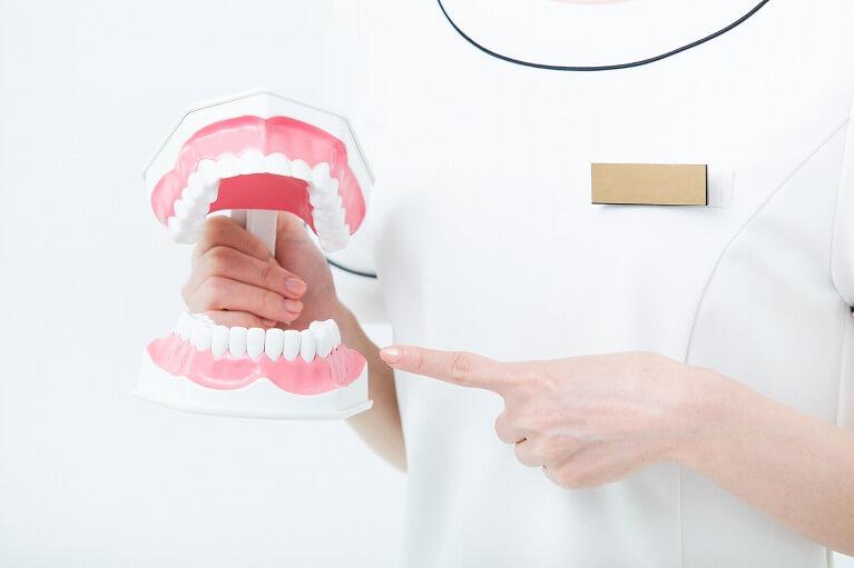 顎咬合学会認定医の院長による咬み合わせを重視した治療